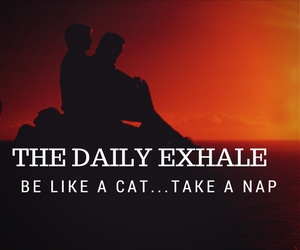 Be Like a CatTake a Nap